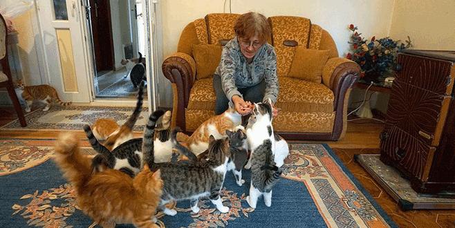 Kiraladığı evde 70 kediyle yaşıyor