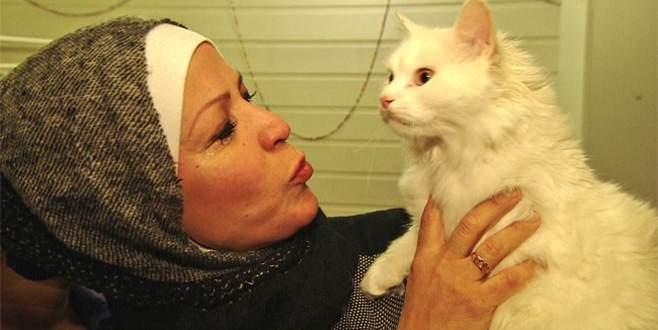 Sığınmacı kedinin Norveç'e inanılmaz kaçışı