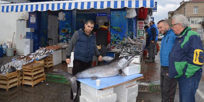 Mudanya'da dev kılıç balığı