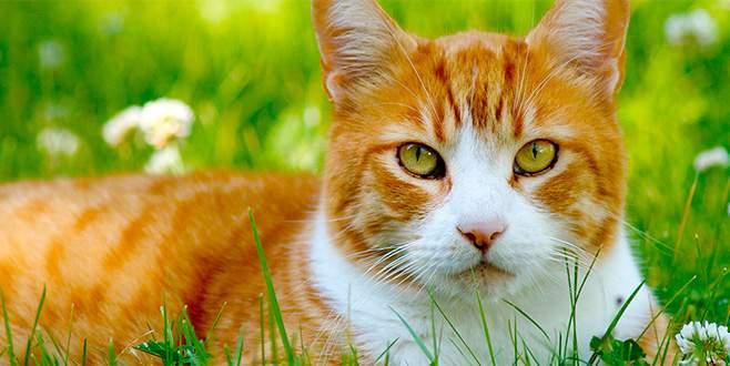Kedi sahipleri dikkat! Mart geliyor