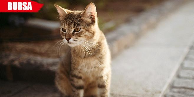 'Hayvansever' kadına 'kedilere eziyet'ten para cezası