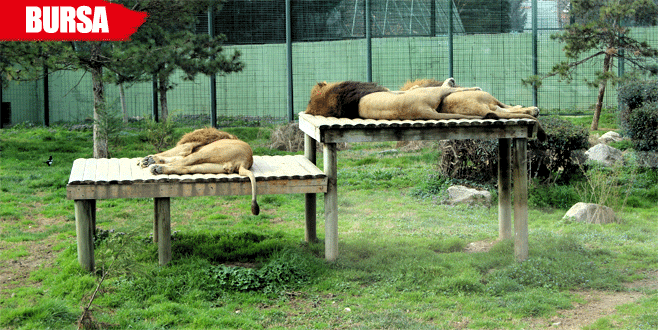 Hayvanlar kış ortasında güneşin tadını çıkarıyor