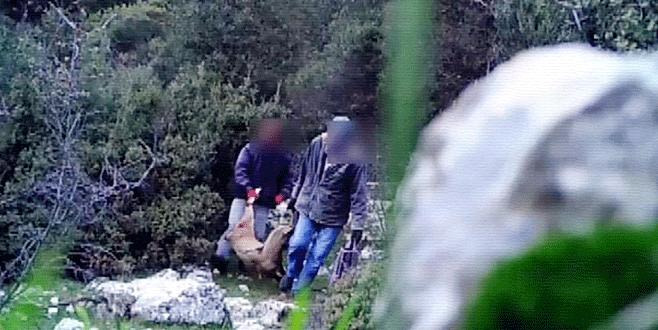 Fotokapana yakalanan avcılara 20 bin lira ceza