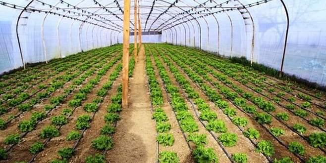 Hassas tarım için 'gıda teknokenti' kuruluyor