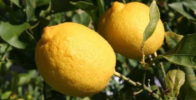 Limon fiyatı rekor kırdı