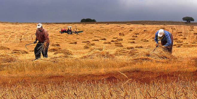 Tarıma dayalı yatırımlara hibe destek