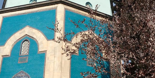 Bursa'da bahar çiçekleri fotoğraf sanatçılarını coşturdu