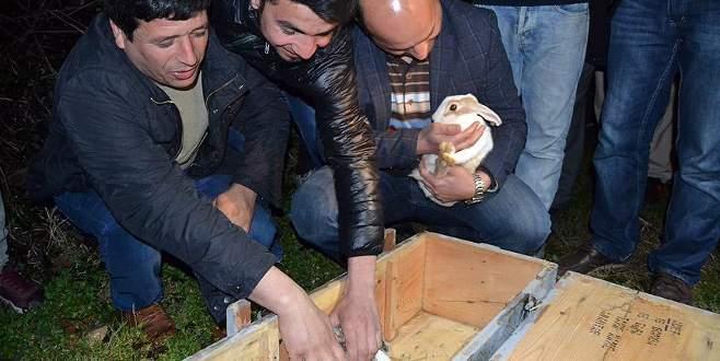 Bursa'da şüpheli sandıktan tavşan çıktı