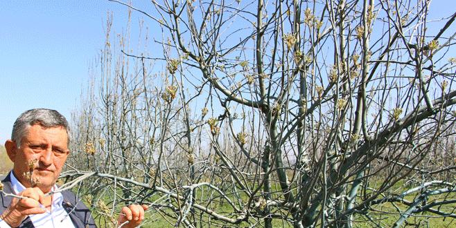 Yenişehir Ovası'nda meyveye don darbesi