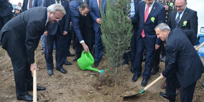 Bursa'da yanan orman alanına 3 bin fidan dikildi