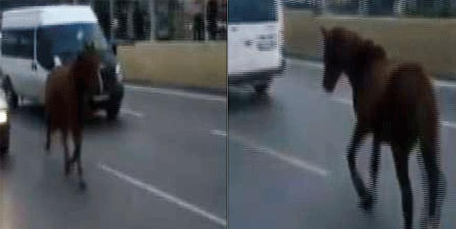 Bursa'da bir at vakası daha