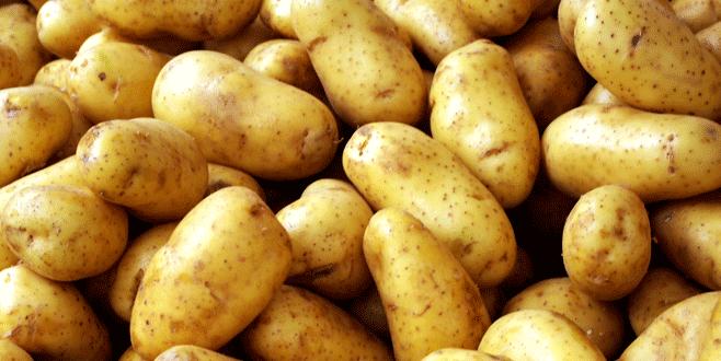 Patates üreticisinin Suriye sevinci