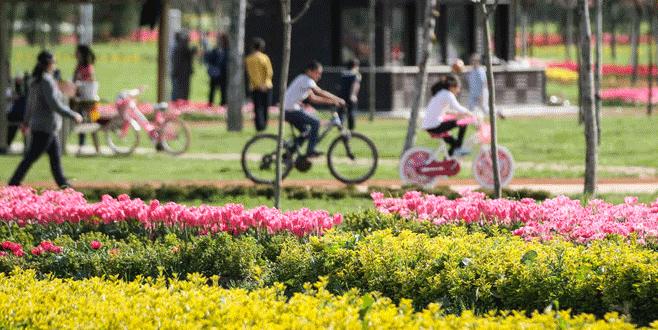 Bursa milyonlarca çiçekle ilkbaharı karşıladı