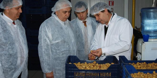 Kardelen üretimde Türkiye'ye örnek