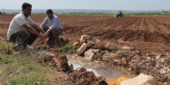 Hibe desteği genç çiftçilere 'umut' oldu