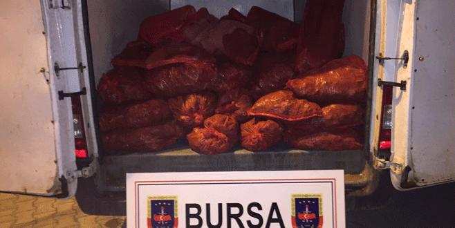 Bursa'da jandarmadan kaçak midye operasyonu