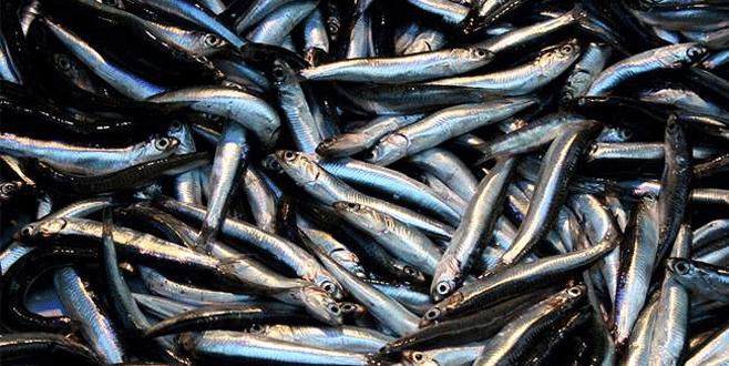 Yasak başladı balık zamlandı