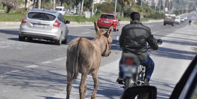 Eşeğini motosikletiyle çekince…
