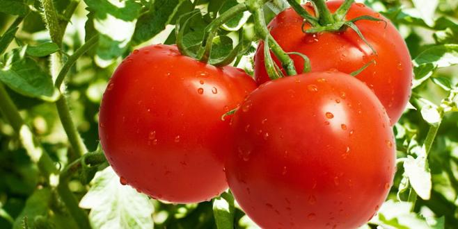 En ağır darbe domatese