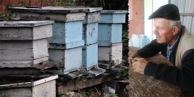 Katil arılar can aldı