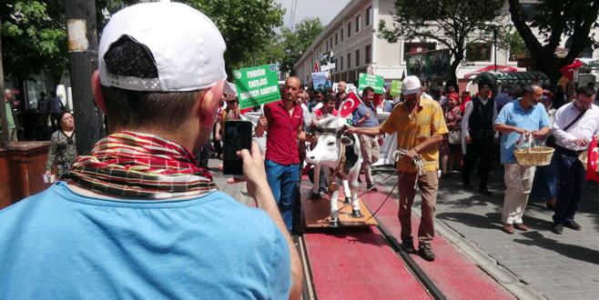 Bursa'da maket inekle selfie yarışı