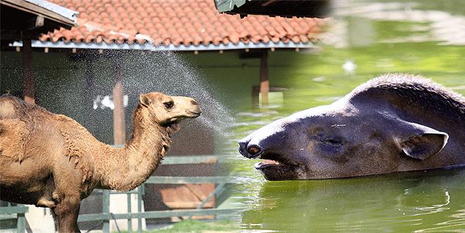 Bursa'da sıcaklık hayvanları da bunalttı