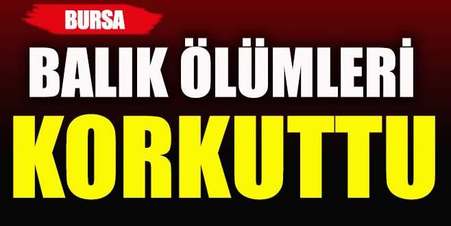 Bursa'da toplu balık ölümleri korkuttu