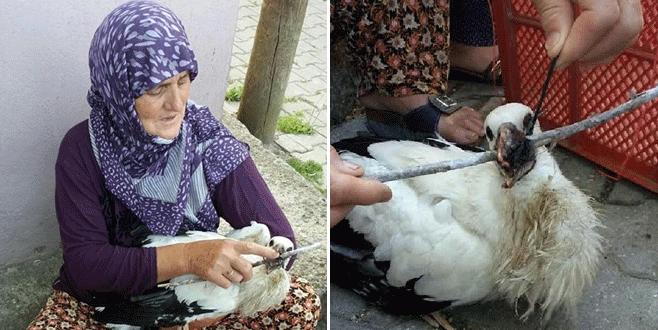 Bursa'da yavru leylek için seferber oldular