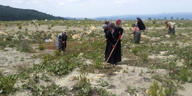 Bursa'da köylü kadınlara ek gelir kapısı