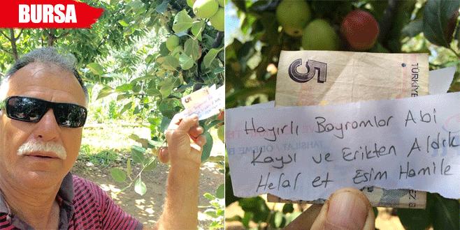 Hamile eşi için aldığı meyvelerin parasını ağaca astı