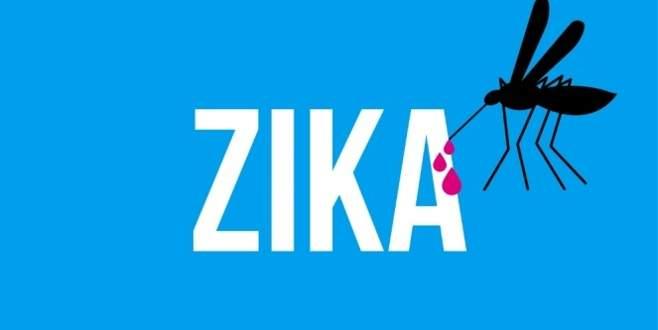 Zika virüsü ev sineklerinde de tespit edildi