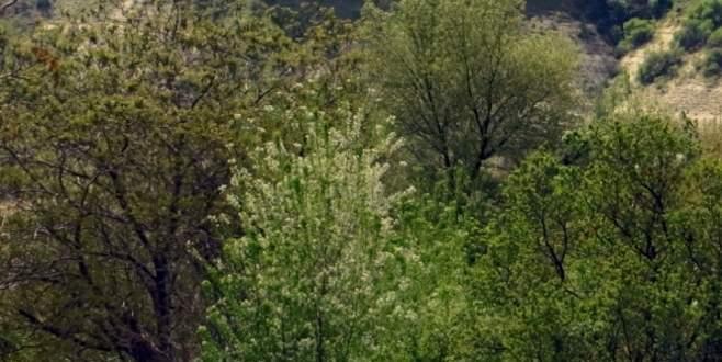 Karı ve koca ormandaki kuyuda ölü bulundu