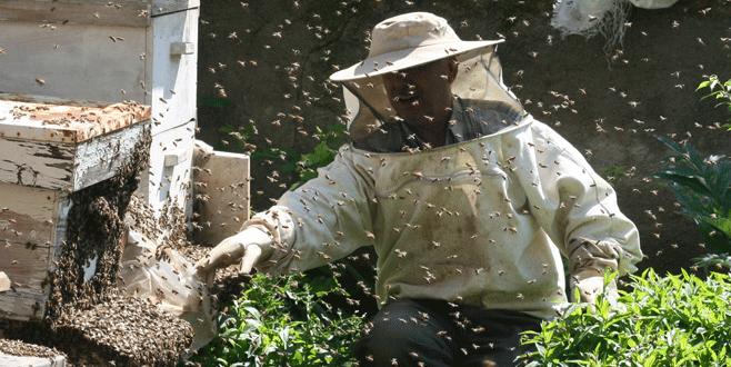 Yenişehir'de bal üretimi artıyor
