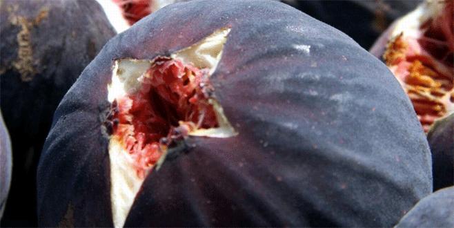 Bursa Valiliği'nden siyah incir üreticisine uyarı