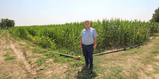 Tohumluk mısır ekiminde artış
