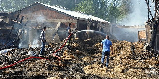 Bursa'da çıkan yangında 7 büyükbaş hayvan telef oldu