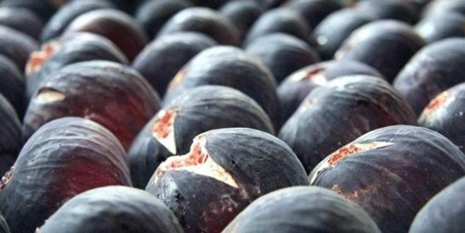 Siyah incir ihracatı başladı