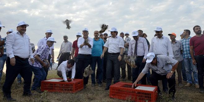 Bursa'da doğaya bin 'kınalı keklik' salındı