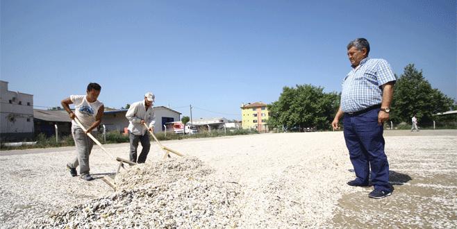 Yenişehir'de ayçiçeği hasadı başladı