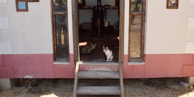 Bursa'da sosyal medyayı sallayan kediler güvende