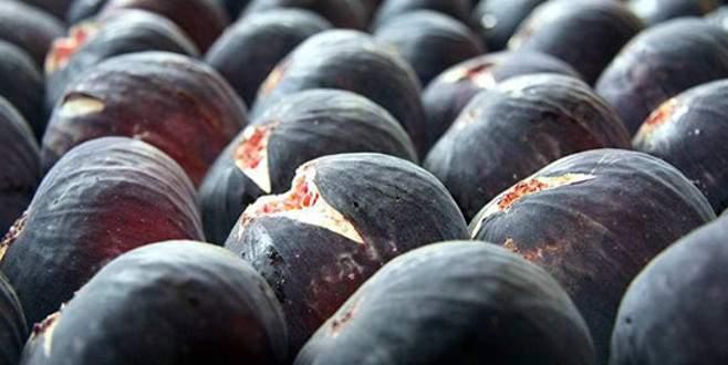 'Siyah incirde hedef Uzakdoğu pazarı'