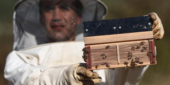 Bursa'da kilogramı 500 bin liraya 'arı zehri'