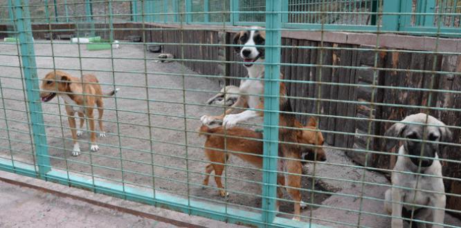 Karacabey'e modern hayvan barınağı