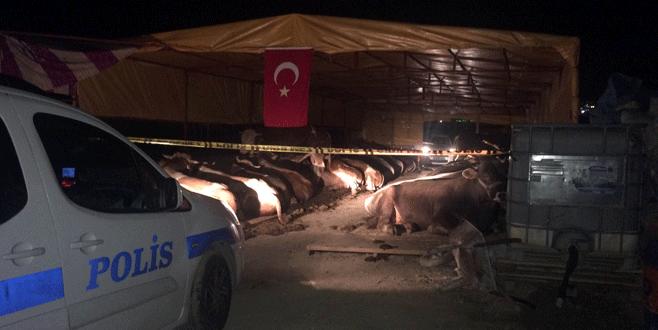 Kurbanlık satış yerinde silahlı kavga: 3 ölü, 3 yaralı