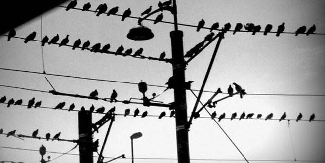 Kuşlara yuva yapıldı kesintileri azaldı