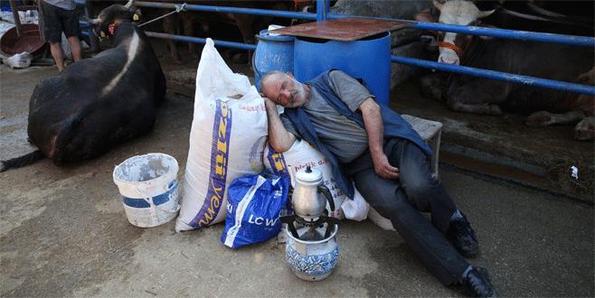 Bursa'da kurbanlıklarla aynı çadırda kalıyorlar