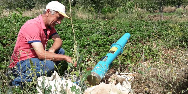 Domuzsavar Bursalı çiftçilerin umudu oldu