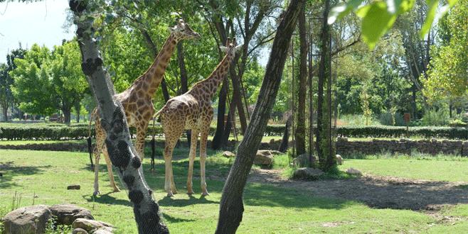 Bursa Hayvanat Bahçesi'nden 'bayram' sürprizi