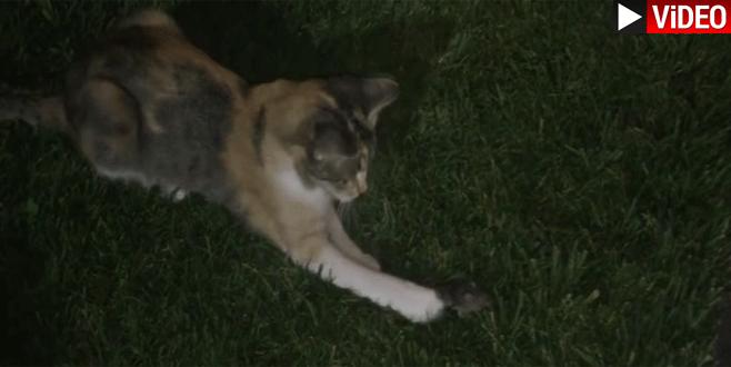 Bursa'da kedinin fareyle keyifli oyunu kamerada
