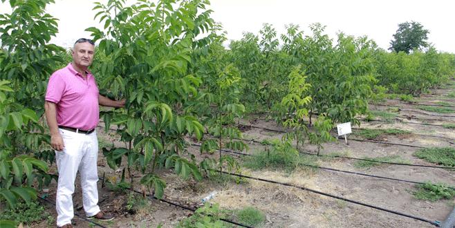 Yenişehir'de ceviz bahçeleri genişliyor